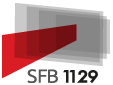 SFB 1129 Logo